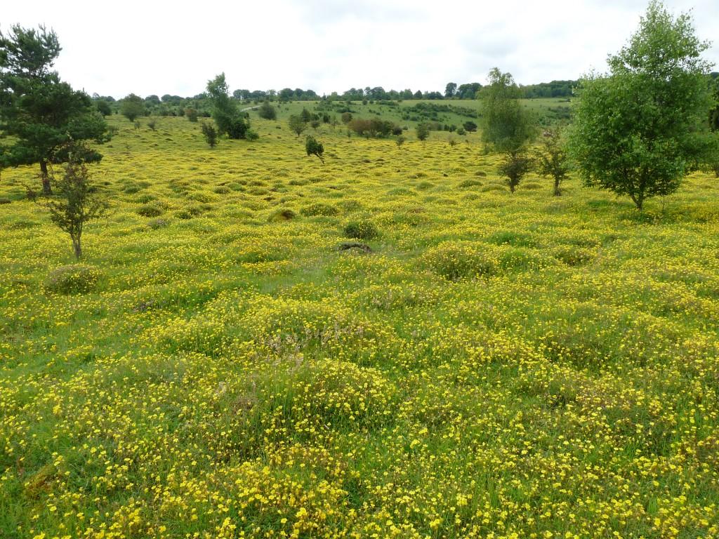 Porton Down_flower-rich mesotrophic grassland